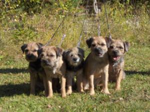 Hundarna-17.9.06-031_320